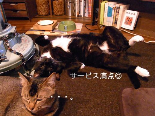 f:id:akiyochan15:20121230152409j:image
