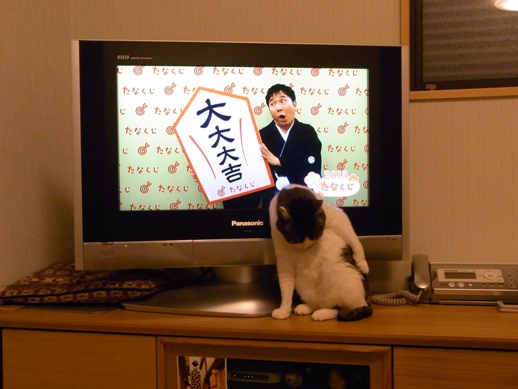 f:id:akiyochan15:20130101004224j:image