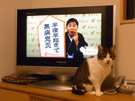 f:id:akiyochan15:20130105011105j:image
