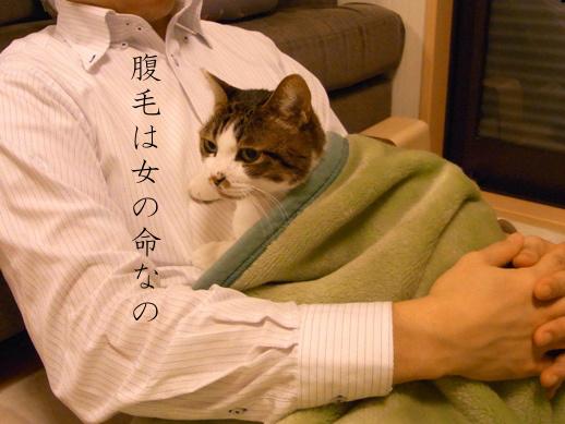 f:id:akiyochan15:20130109185105j:image