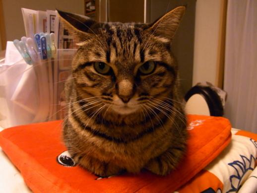 f:id:akiyochan15:20130118072407j:image:w518