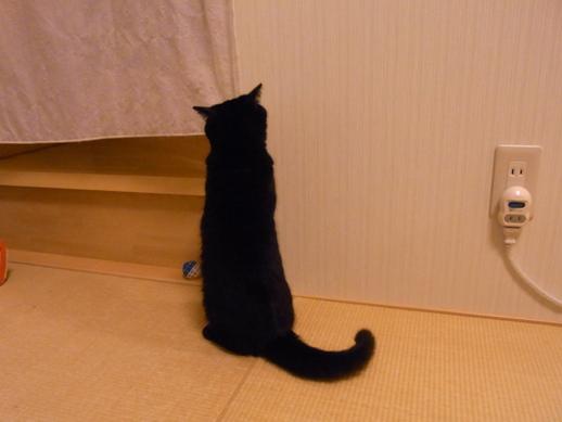 f:id:akiyochan15:20130203012426j:image