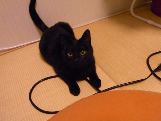 f:id:akiyochan15:20130203225232j:image