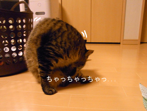 f:id:akiyochan15:20130204193113j:image