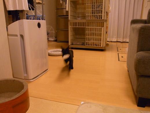 f:id:akiyochan15:20130207193011j:image