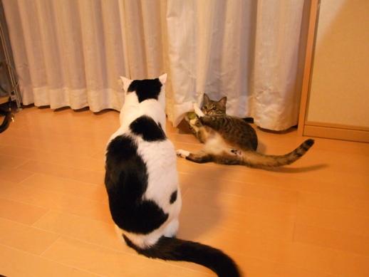 f:id:akiyochan15:20130212070935j:image
