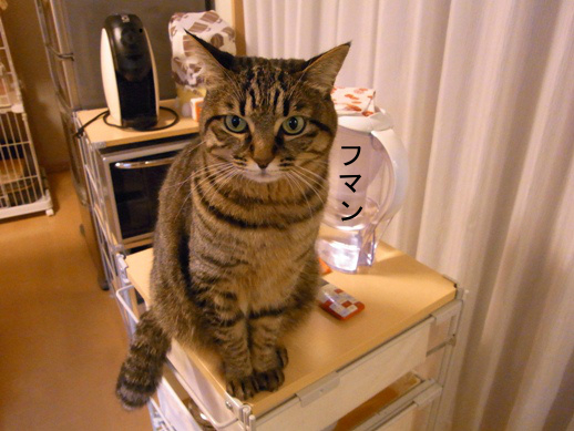 f:id:akiyochan15:20130215200702j:image