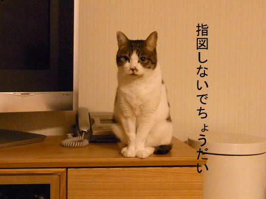 f:id:akiyochan15:20130219160716j:image