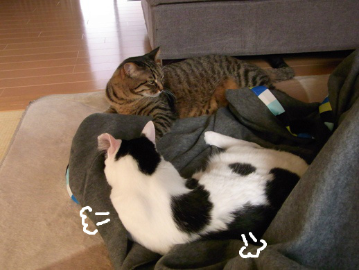 f:id:akiyochan15:20130316221848j:image