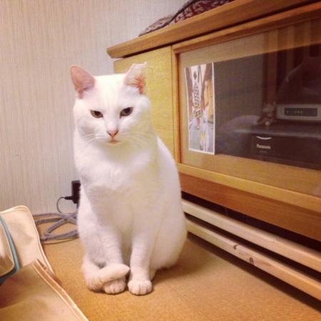 f:id:akiyochan15:20130601152059j:image:w400