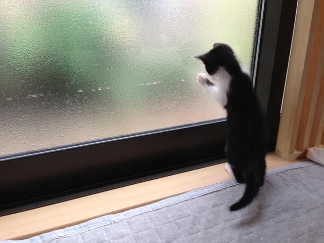 f:id:akiyochan15:20130619143951j:image:w519