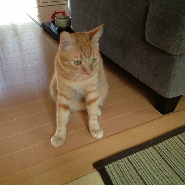 f:id:akiyochan15:20130816183424j:image:w450