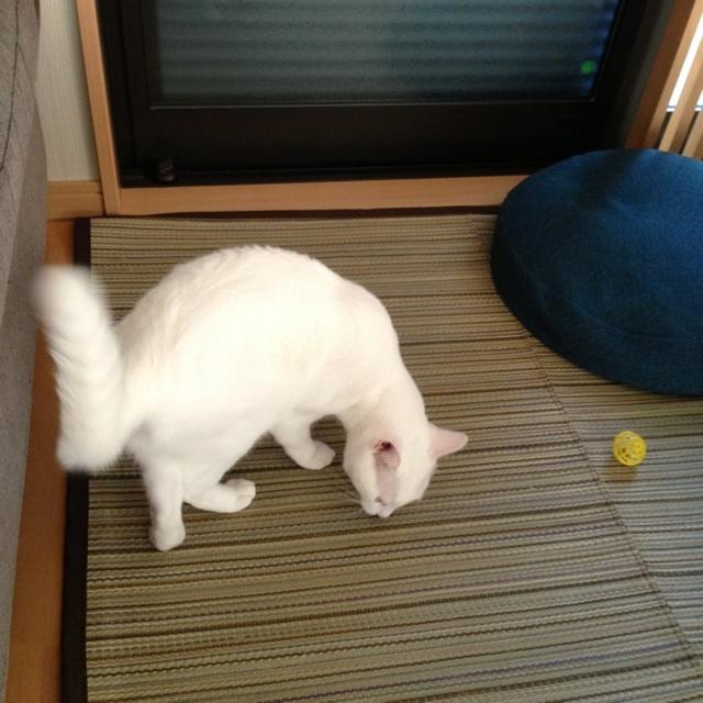 f:id:akiyochan15:20130816183425j:image:w450
