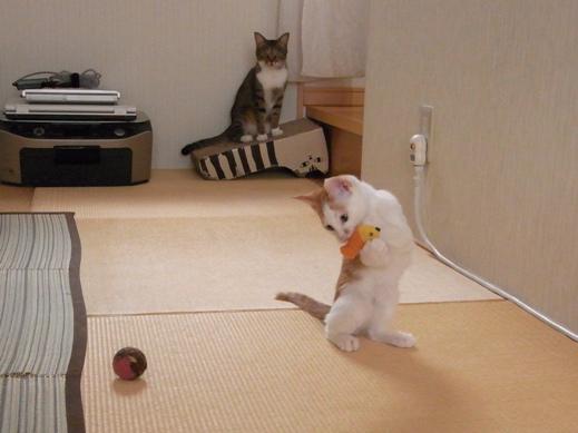 f:id:akiyochan15:20130817103720j:image