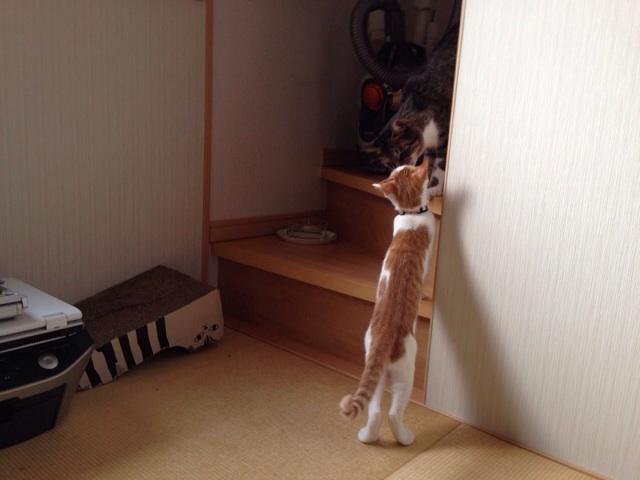 f:id:akiyochan15:20131006150110j:image:w518