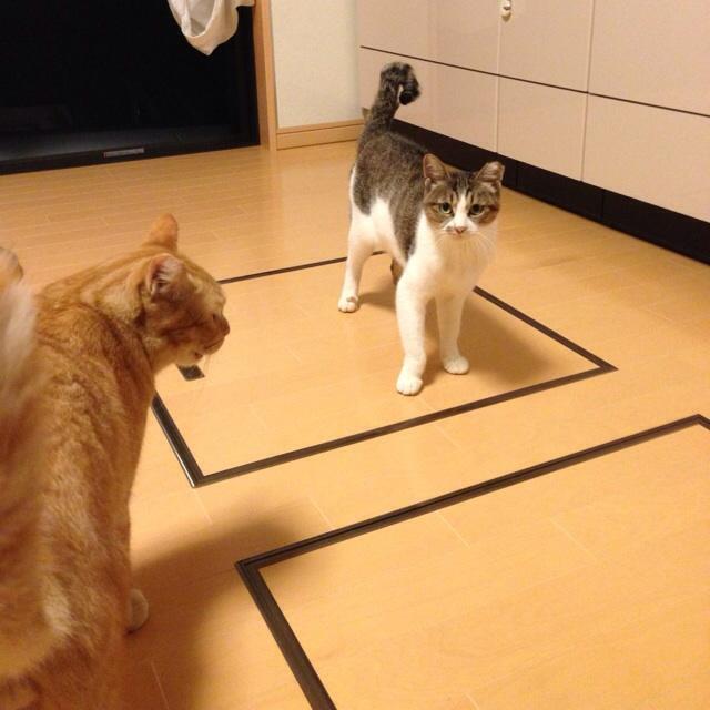 f:id:akiyochan15:20131011134845j:image:w450