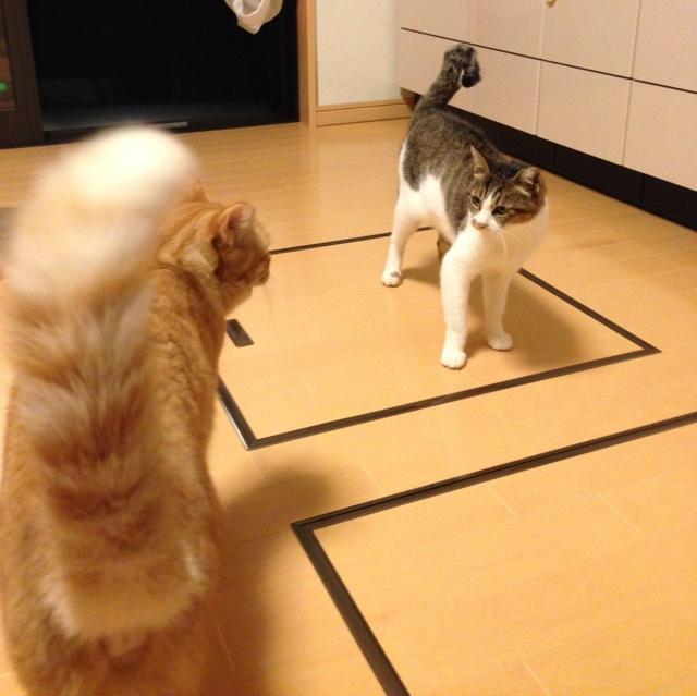 f:id:akiyochan15:20131011134846j:image:w450