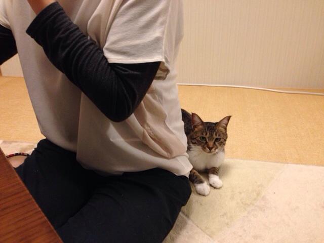 f:id:akiyochan15:20131019223944j:image:w518