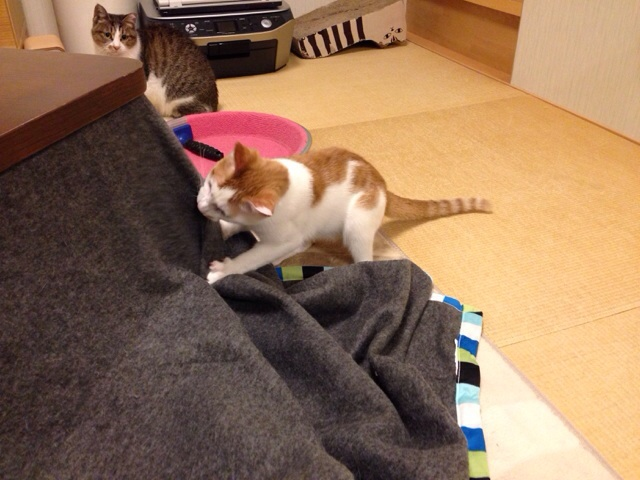 f:id:akiyochan15:20131020130654j:image:w518