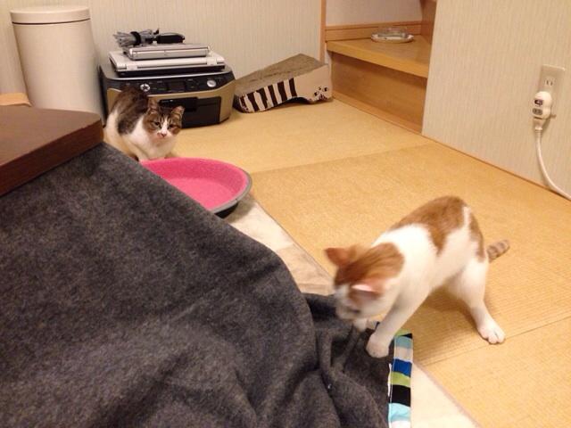 f:id:akiyochan15:20131020130655j:image:w518