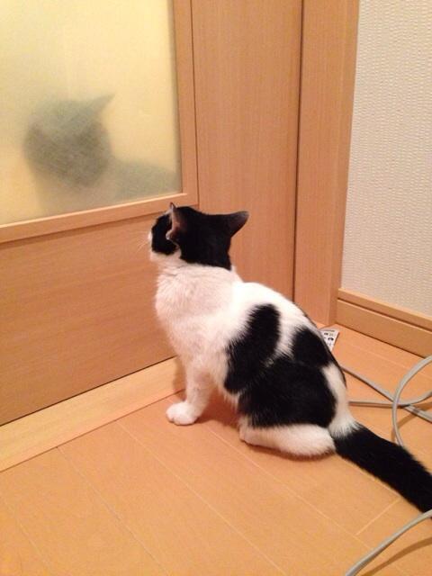f:id:akiyochan15:20131124140704j:image:w389