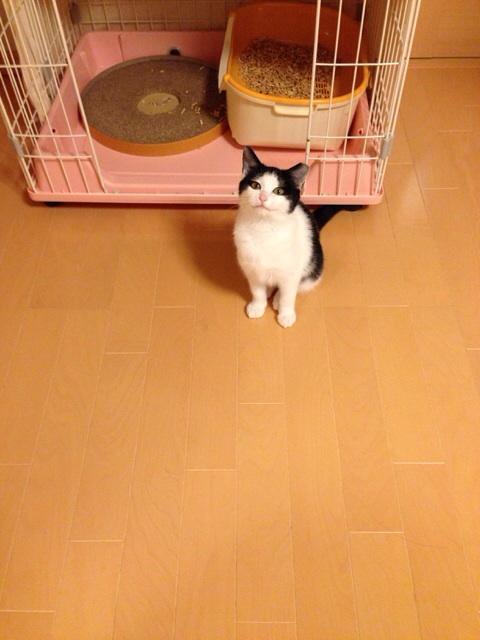 f:id:akiyochan15:20131203210120j:image:w389