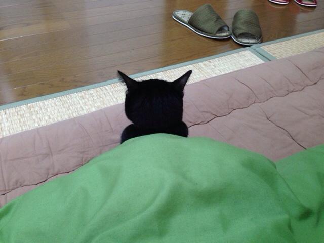 f:id:akiyochan15:20140118172158j:image:w518