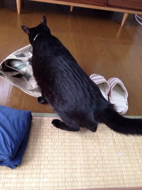 f:id:akiyochan15:20140118172222j:image:w389
