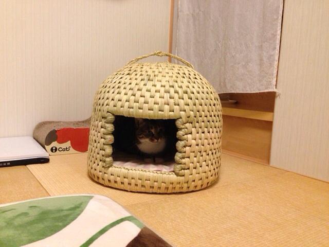 f:id:akiyochan15:20140219232350j:image:w518
