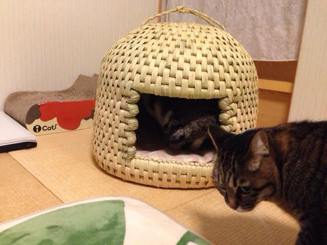 f:id:akiyochan15:20140219232421j:image:w518
