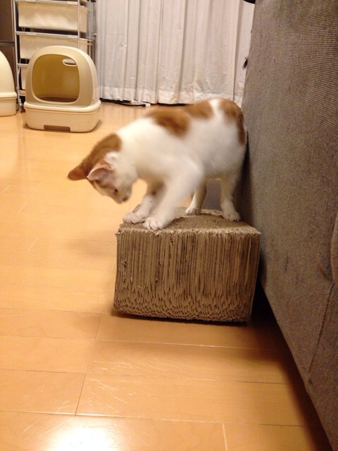 f:id:akiyochan15:20140305003852j:image:w389