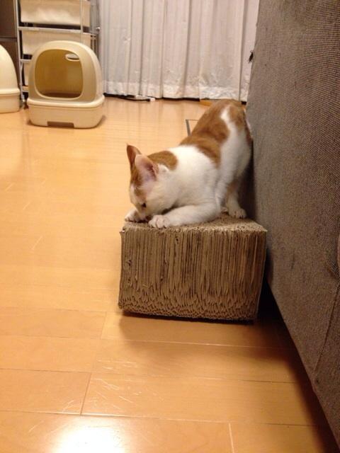 f:id:akiyochan15:20140305003853j:image:w389