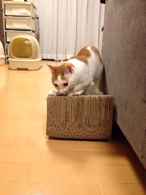 f:id:akiyochan15:20140305003854j:image:w389