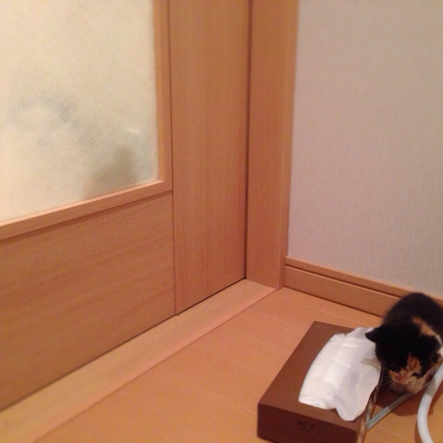 f:id:akiyochan15:20140321035906j:image:w400