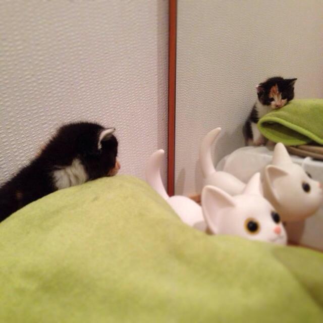 f:id:akiyochan15:20140321035907j:image:w400
