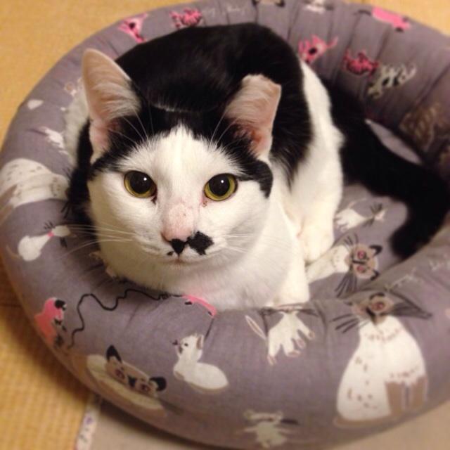 f:id:akiyochan15:20140411020931j:image:w400