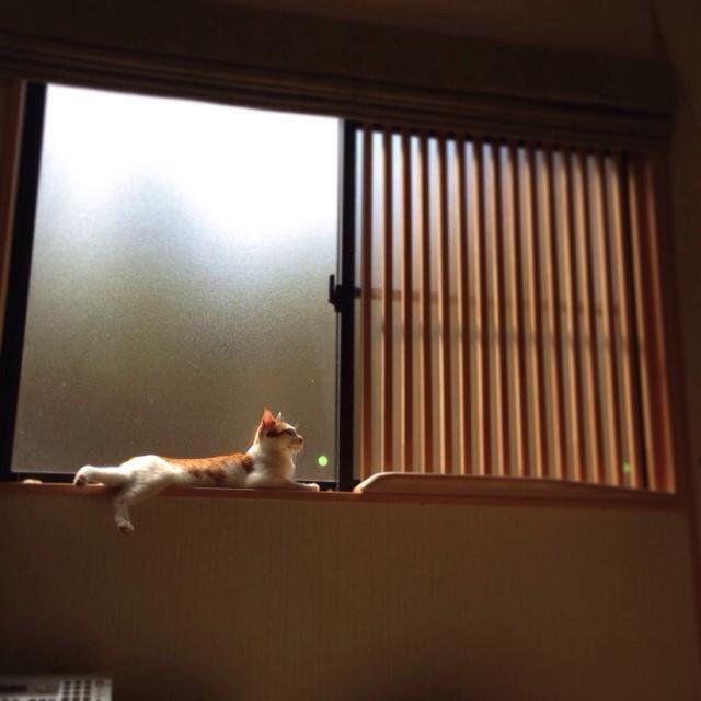 f:id:akiyochan15:20140506165142j:image:w400