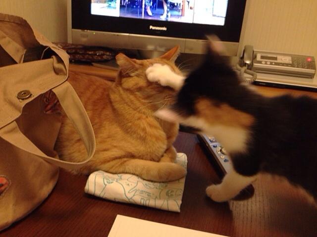f:id:akiyochan15:20140510033132j:image:w518