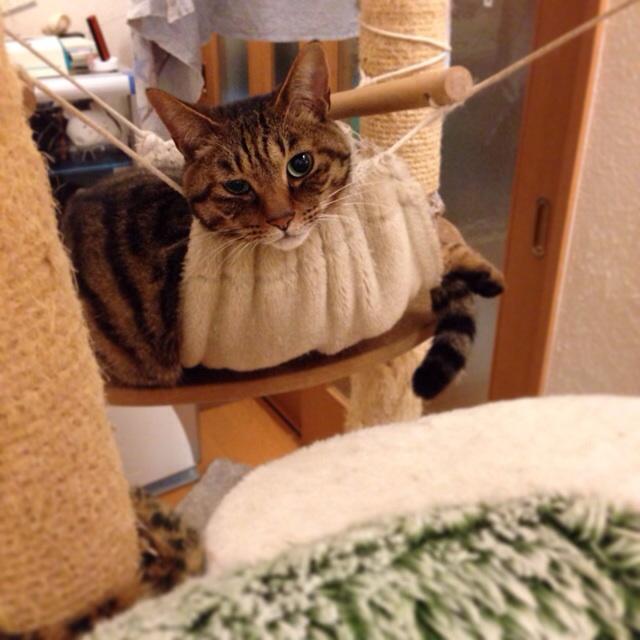 f:id:akiyochan15:20140516002943j:image:w400