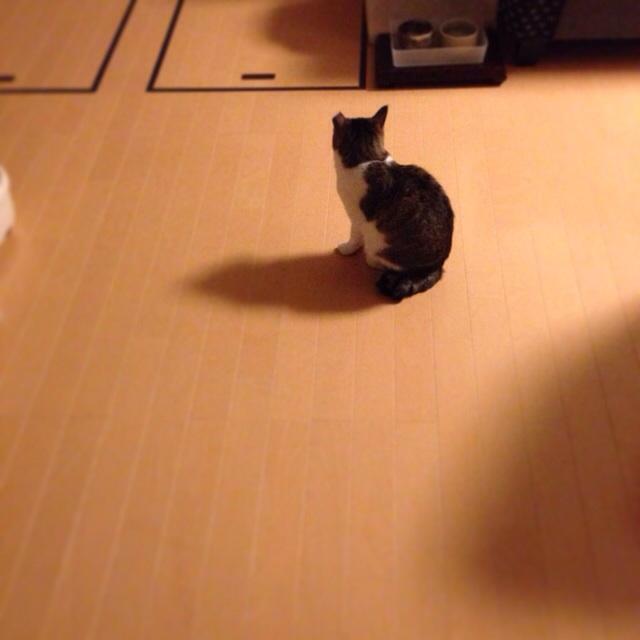 f:id:akiyochan15:20140516002945j:image:w400