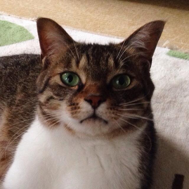 f:id:akiyochan15:20140615185301j:image:w400
