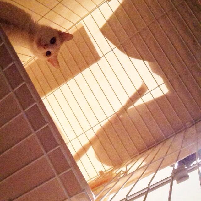 f:id:akiyochan15:20140616094758j:image:w400