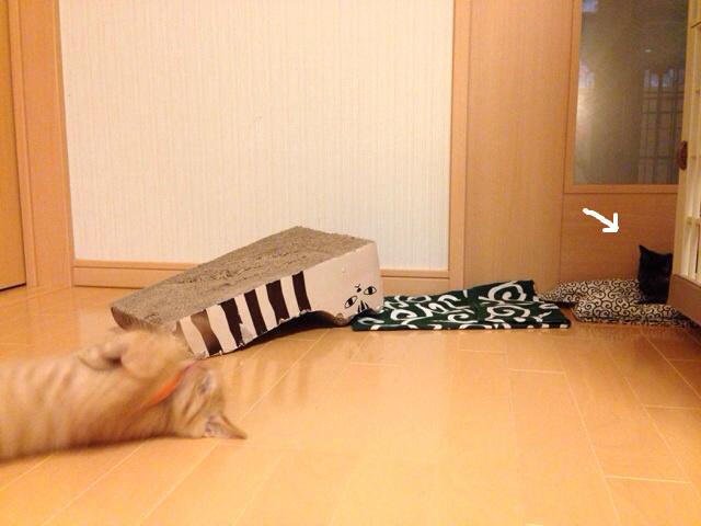 f:id:akiyochan15:20140704114235j:image:w518