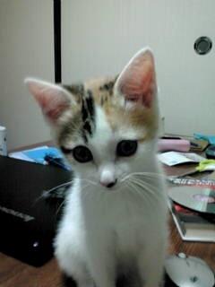 f:id:akiyochan15:20140715111308j:image