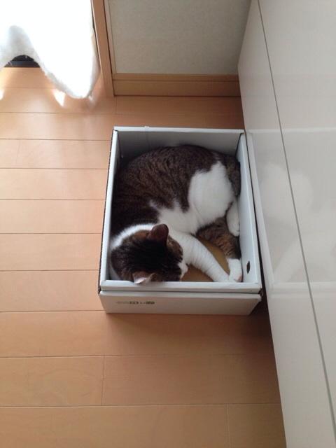f:id:akiyochan15:20140807132423j:image:w389