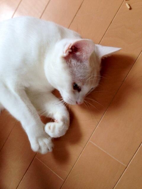 f:id:akiyochan15:20140814144652j:image:w389