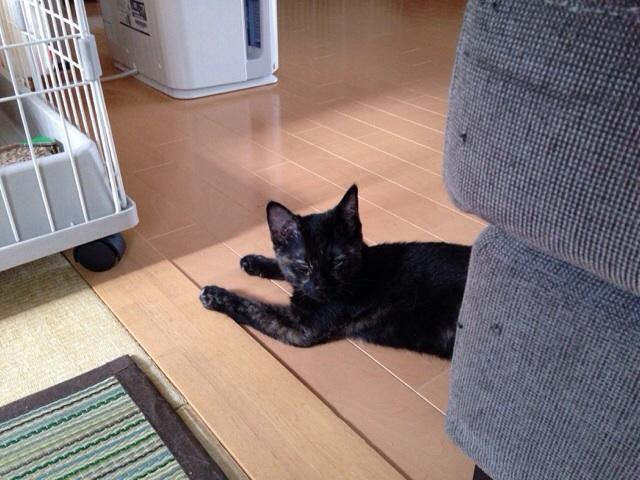 f:id:akiyochan15:20140818134422j:image:w518