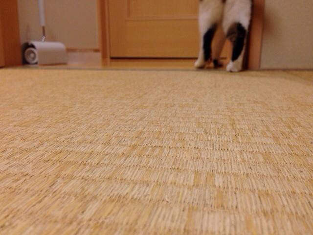 f:id:akiyochan15:20140923223426j:image:w518