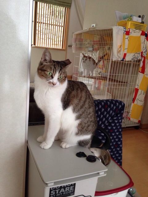 f:id:akiyochan15:20141005044001j:image:w389