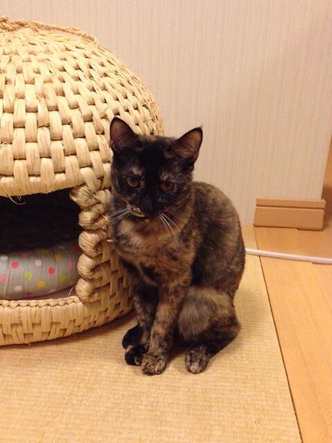 f:id:akiyochan15:20141012034302j:image:w389